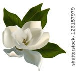 Magnolia blossom clipart from Creative Commons