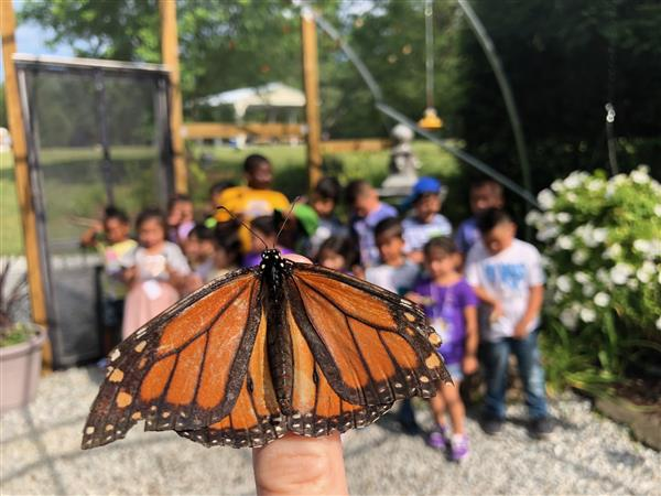 Butterfly with PreK class in background.