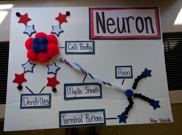 3D Neuron Project